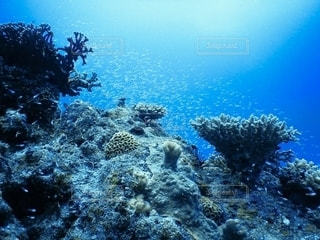 サンゴの水中眺めの写真・画像素材[2555525]