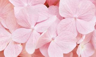 ピンクの花でいっぱいの写真・画像素材[1463284]