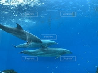 イルカの写真・画像素材[2260619]