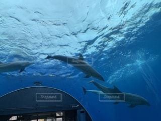 イルカの写真・画像素材[2260620]