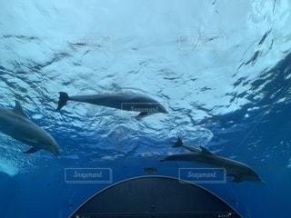 イルカの写真・画像素材[2260621]