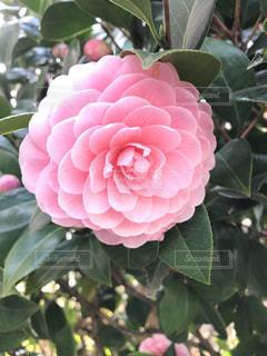 近くの花のアップの写真・画像素材[1464989]