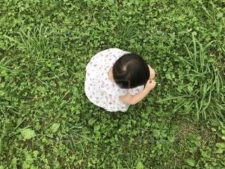 緑に白の写真・画像素材[2292430]