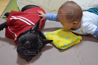 犬と赤ちゃんの写真・画像素材[1481715]