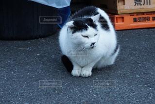 下町の野良猫の写真・画像素材[1466539]