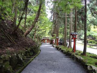 貴船神社の写真・画像素材[1586053]
