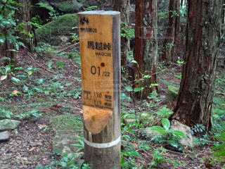 熊野古道の馬越峠の写真・画像素材[1592485]