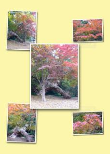 紅葉 光景セットの写真・画像素材[1494909]
