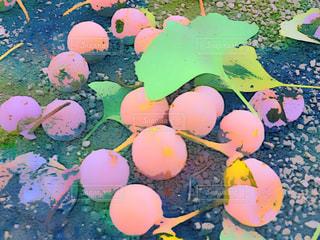 秋 落ちた木の実の写真・画像素材[1523126]