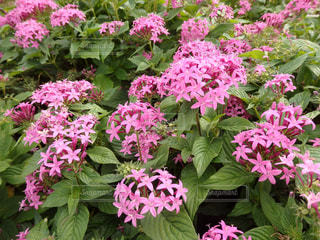 花壇の花の写真・画像素材[1562574]