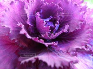 花の写真・画像素材[1710789]