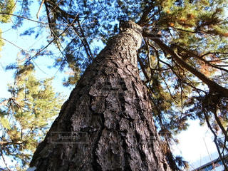 樹木の写真・画像素材[1710801]