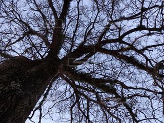 冬を過ごすの写真・画像素材[1771490]