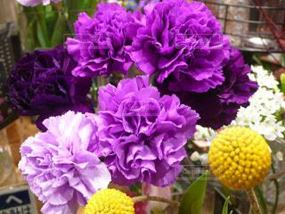徳島 イオンモールの花屋さんでの写真・画像素材[1773870]