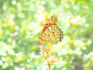 明るい秋色の写真・画像素材[1483104]