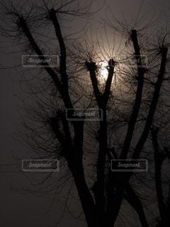 幻想的な樹木の写真・画像素材[1830485]