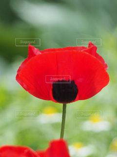 花のクローズアップ(赤いクマさん)の写真・画像素材[2179164]