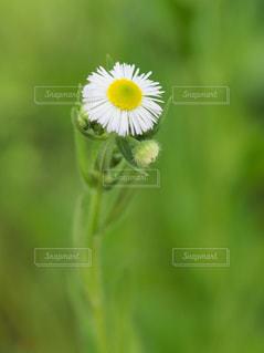 花のクローズアップ・背景・テクスチャの写真・画像素材[2186747]