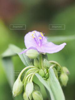 花のクローズアップの写真・画像素材[2186775]