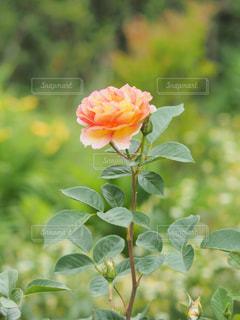 花のクローズアップの写真・画像素材[2190279]
