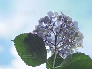 花のクローズアップの写真・画像素材[2223311]