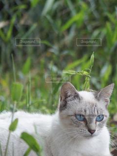 野原のに横たわる捨て猫の写真・画像素材[2232396]