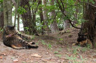 森の中に横たわっている猫の写真・画像素材[2382801]