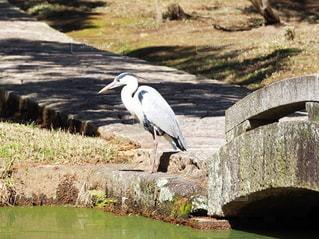 水面を見つめて立っている鳥の写真・画像素材[3052015]