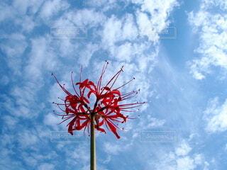 空と曼珠沙華の写真・画像素材[3761806]
