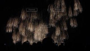 夜空の花火の写真・画像素材[1469401]