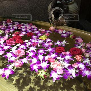 お花の露天風呂の写真・画像素材[1469410]