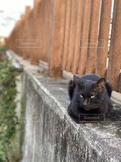 木の塀の上に座っている猫の写真・画像素材[3182160]