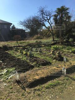 庭家庭菜園の写真・画像素材[3182162]