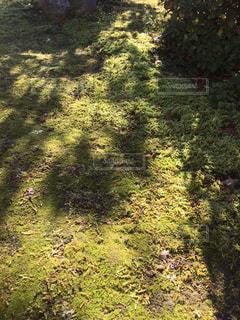 庭の写真・画像素材[3182163]