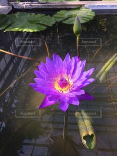 紫色の花一杯の花瓶の写真・画像素材[1491055]