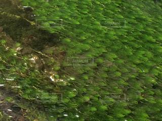 カモンバの写真・画像素材[1851240]