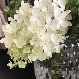 かわいい白い花の写真・画像素材[1472957]
