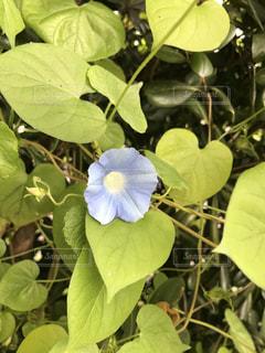 近くの花のアップの写真・画像素材[1489246]
