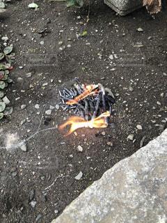 岩の上のオレンジと黒蝶の写真・画像素材[1471464]