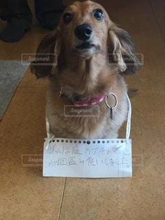 サインの前に座っている犬の写真・画像素材[1470247]