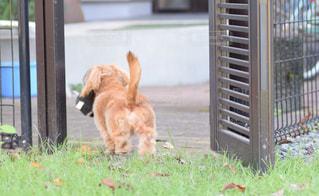 フェンスの前に立っている犬の写真・画像素材[1471726]