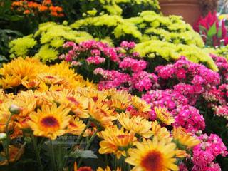 近くの花のアップの写真・画像素材[1486261]
