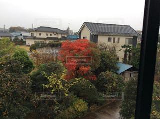 二階の窓から、ハゼの木の紅葉の写真・画像素材[1689679]