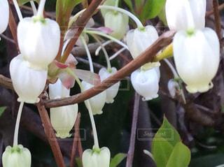 花の写真・画像素材[2041969]