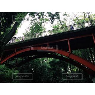 等々力渓谷の橋の写真・画像素材[1472664]