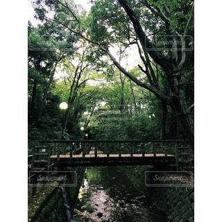 等々力渓谷の橋の写真・画像素材[1472665]