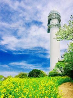 菜の花が咲き誇る大楠山の写真・画像素材[1472718]