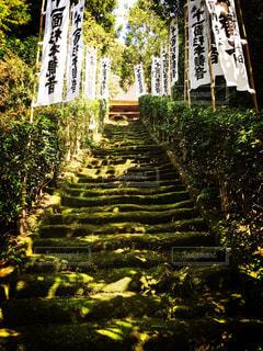 杉本寺の写真・画像素材[1472982]