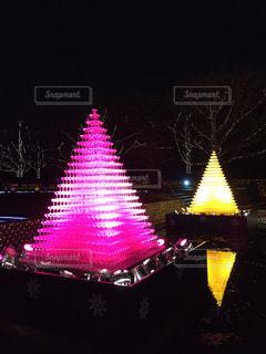 昭和記念公園のイルミネーションの写真・画像素材[1473010]
