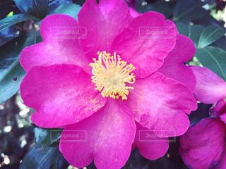 近くの花のアップの写真・画像素材[1473013]
